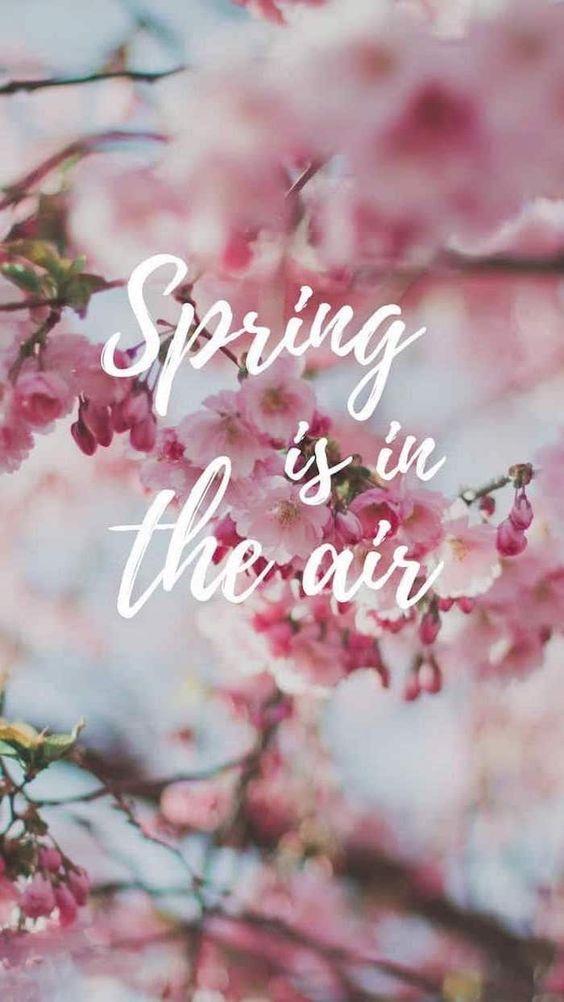 Весна лучшие обои для заставки телефона в отличном качестве (8)