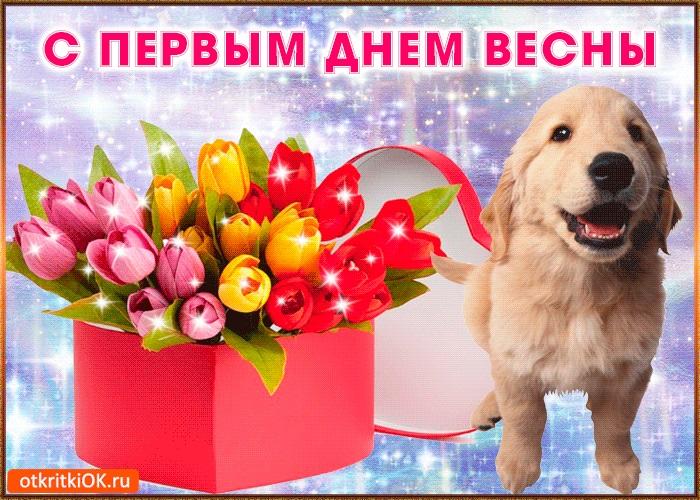 Картинки на 1 день весны - милые поздравления для близких (13)