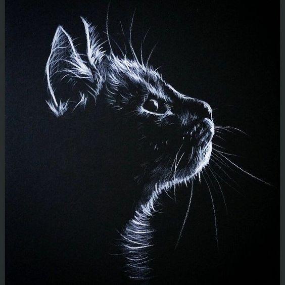 Красивые и крутые фотки на аву коты - подборка за 2020 год (1)