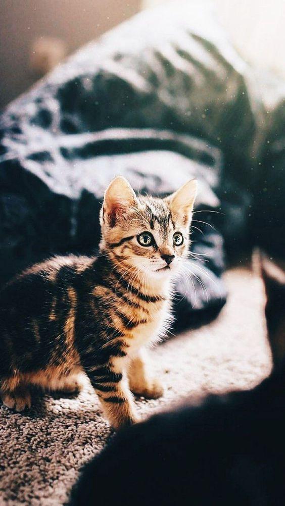 Красивые и крутые фотки на аву коты - подборка за 2020 год (10)