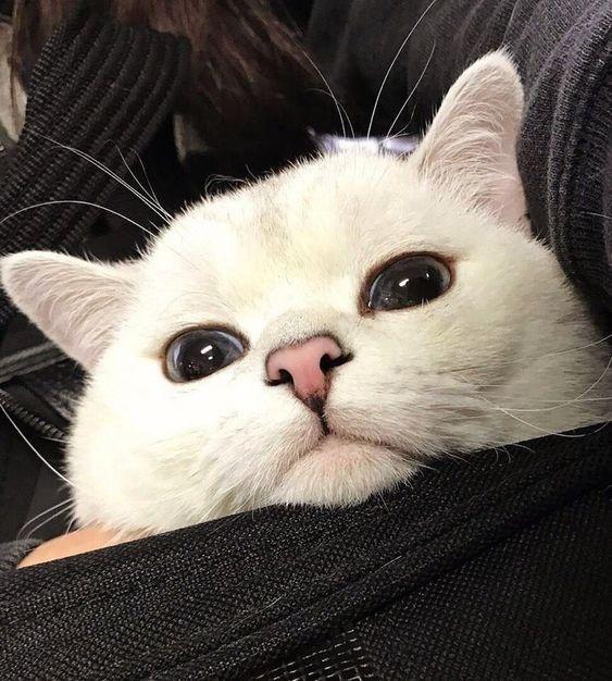 Красивые и крутые фотки на аву коты - подборка за 2020 год (14)
