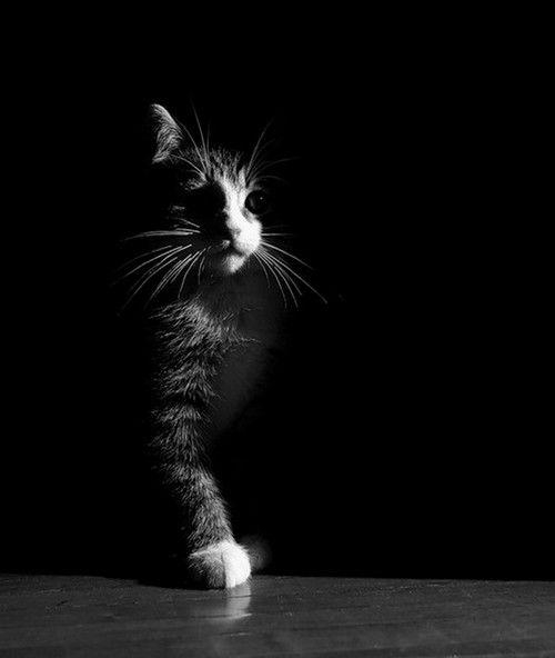 Красивые и крутые фотки на аву коты - подборка за 2020 год (3)