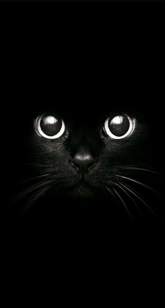 Красивые и крутые фотки на аву коты - подборка за 2020 год (5)