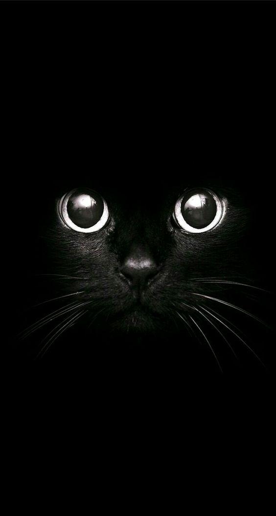Красивые и крутые фотки на аву коты   подборка за 2020 год (5)