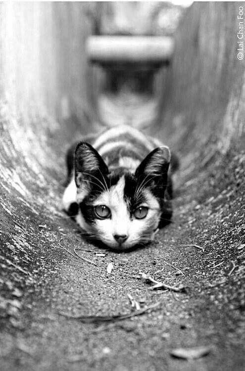 Красивые и крутые фотки на аву коты - подборка за 2020 год (6)