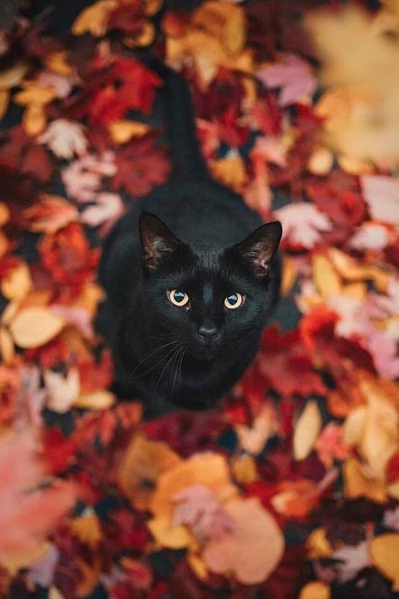 Красивые и крутые фотки на аву коты - подборка за 2020 год (7)