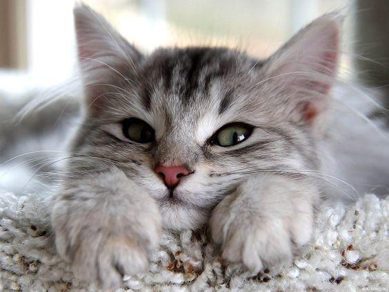 Красивые и крутые фотки на аву коты - подборка за 2020 год (8)