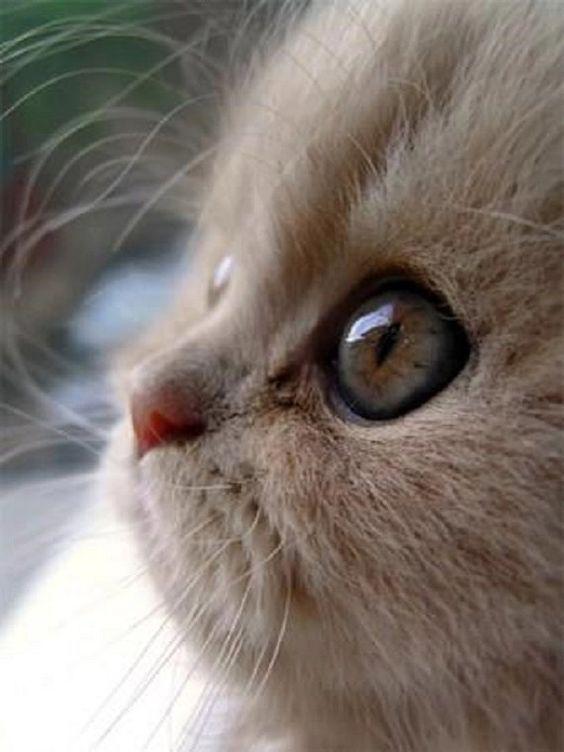 Красивые и крутые фотки на аву коты - подборка за 2020 год (9)