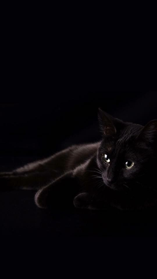 Красивые и удивительные обои котов на заставку смартфона (1)