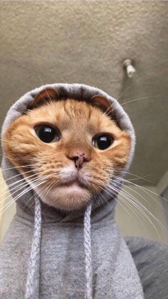 Красивые и удивительные обои котов на заставку смартфона (10)