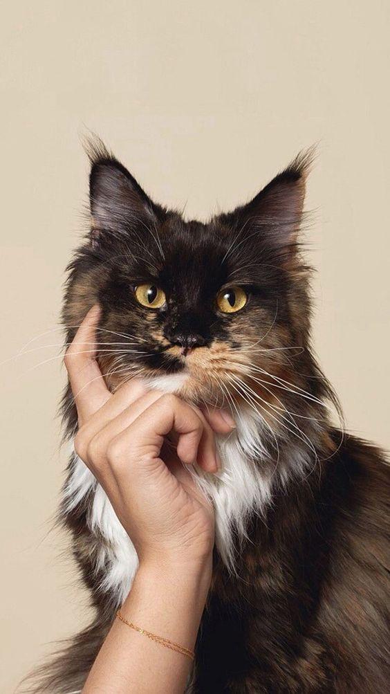Красивые и удивительные обои котов на заставку смартфона (11)
