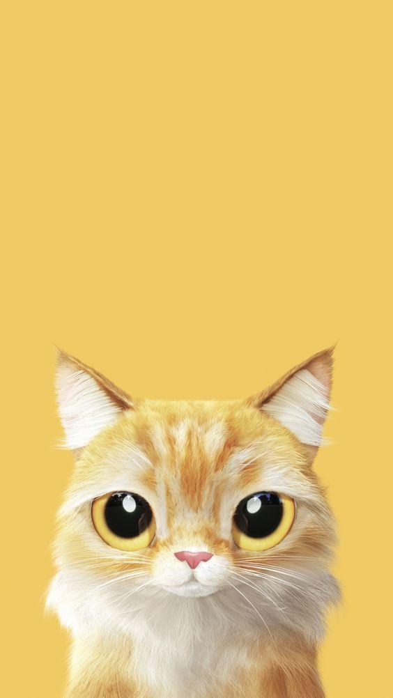 Красивые и удивительные обои котов на заставку смартфона (12)
