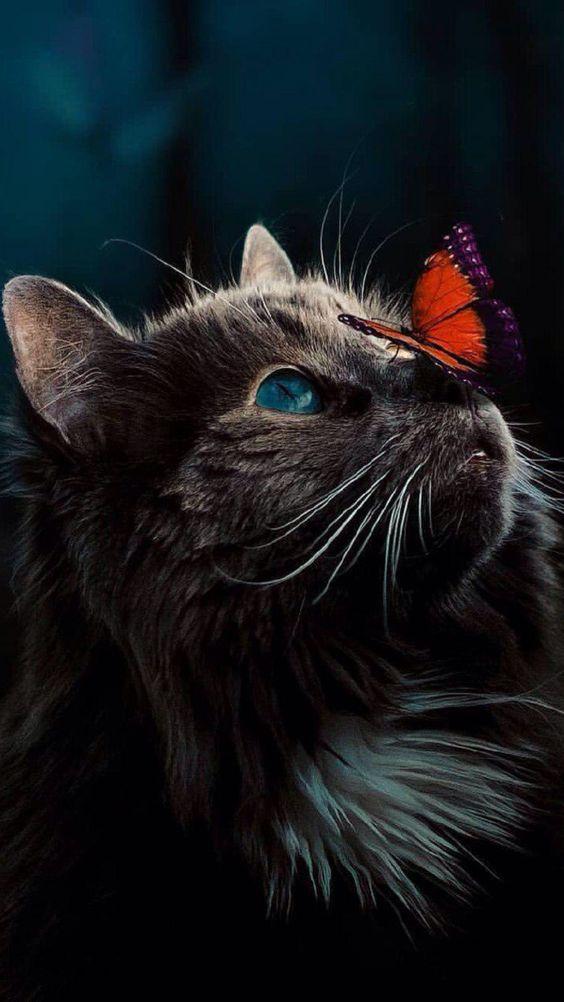 Красивые и удивительные обои котов на заставку смартфона (14)
