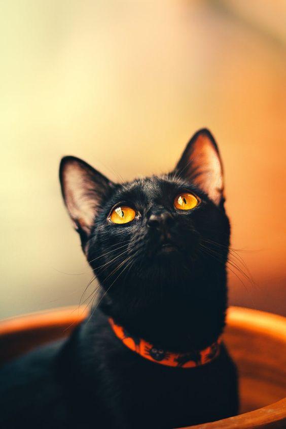Красивые и удивительные обои котов на заставку смартфона (19)