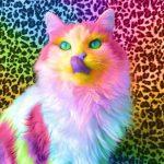Красивые и удивительные обои котов на заставку смартфона