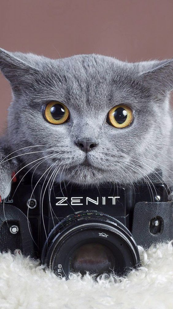 Красивые и удивительные обои котов на заставку смартфона (8)