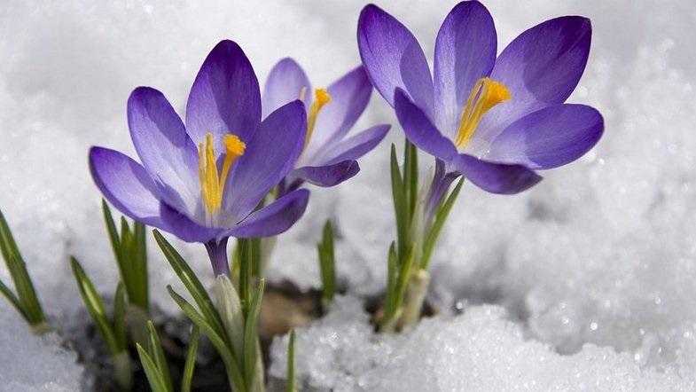 Красивые картинки с первым днем весны - подборка (1)