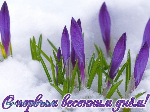 Красивые картинки с первым днем весны - подборка (16)