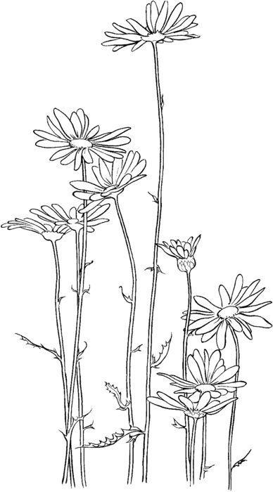 Красивые рисунки цветов для срисовки в свой дневник - 40 лучших идей (13)
