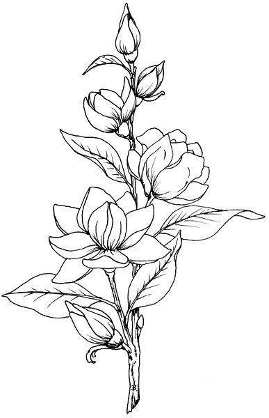 Красивые рисунки цветов для срисовки в свой дневник - 40 лучших идей (15)