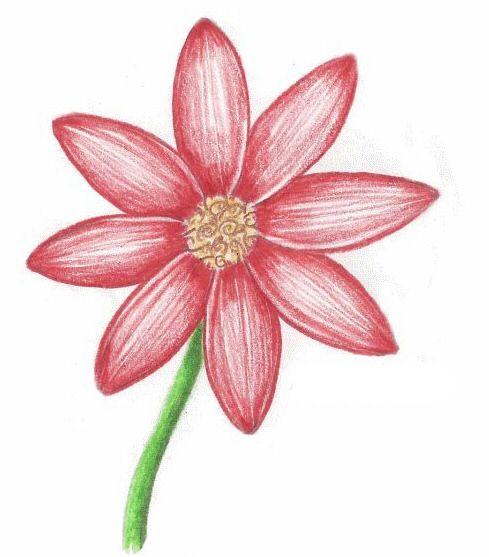 Красивые рисунки цветов для срисовки в свой дневник - 40 лучших идей (17)