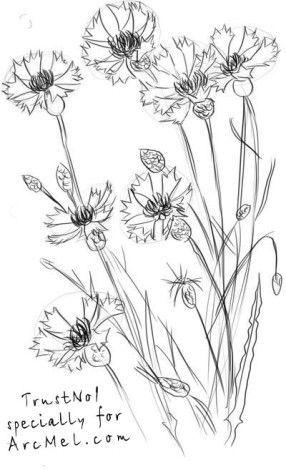 Красивые рисунки цветов для срисовки в свой дневник - 40 лучших идей (25)