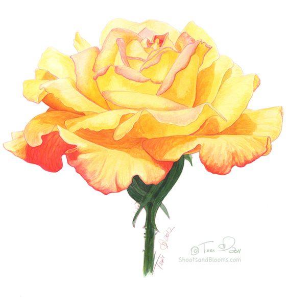 Красивые рисунки цветов для срисовки в свой дневник - 40 лучших идей (31)