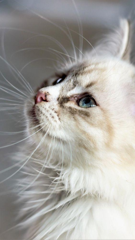Красивые фотографии глаз кошек в отличном качестве (1)