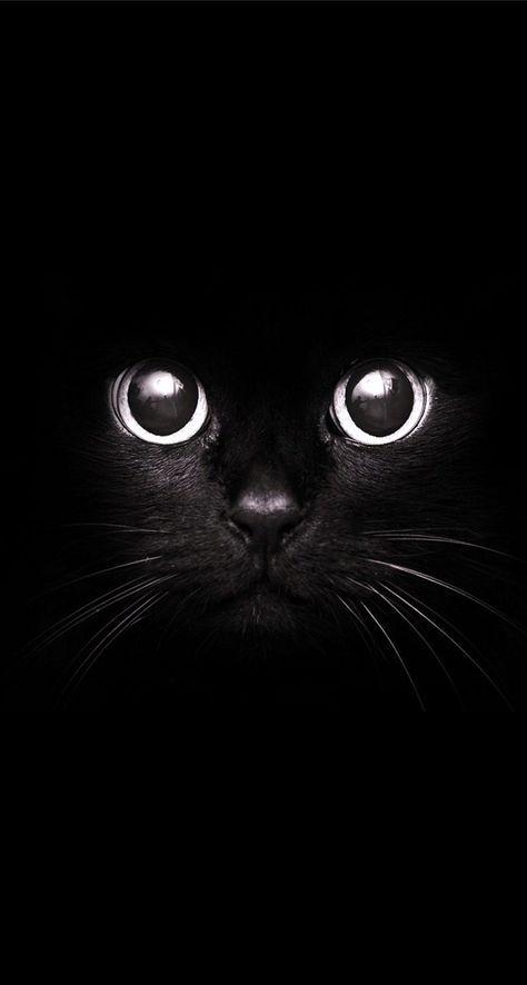 Красивые фотографии глаз кошек в отличном качестве (10)