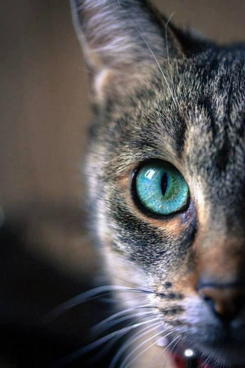 Красивые фотографии глаз кошек в отличном качестве (11)