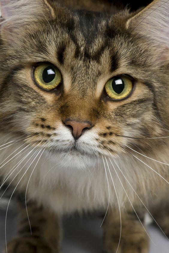 Красивые фотографии глаз кошек в отличном качестве (13)