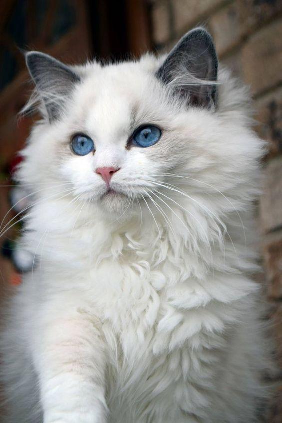 Красивые фотографии глаз кошек в отличном качестве (14)