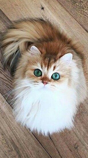 Красивые фотографии глаз кошек в отличном качестве (15)