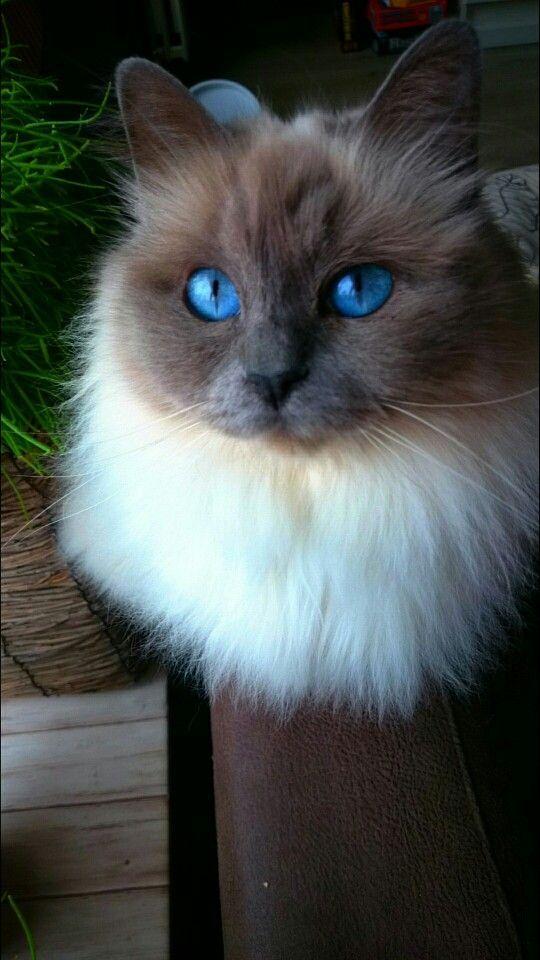 Красивые фотографии глаз кошек в отличном качестве (16)