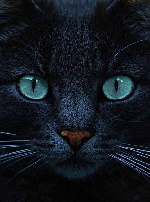 Красивые фотографии глаз кошек в отличном качестве (17)