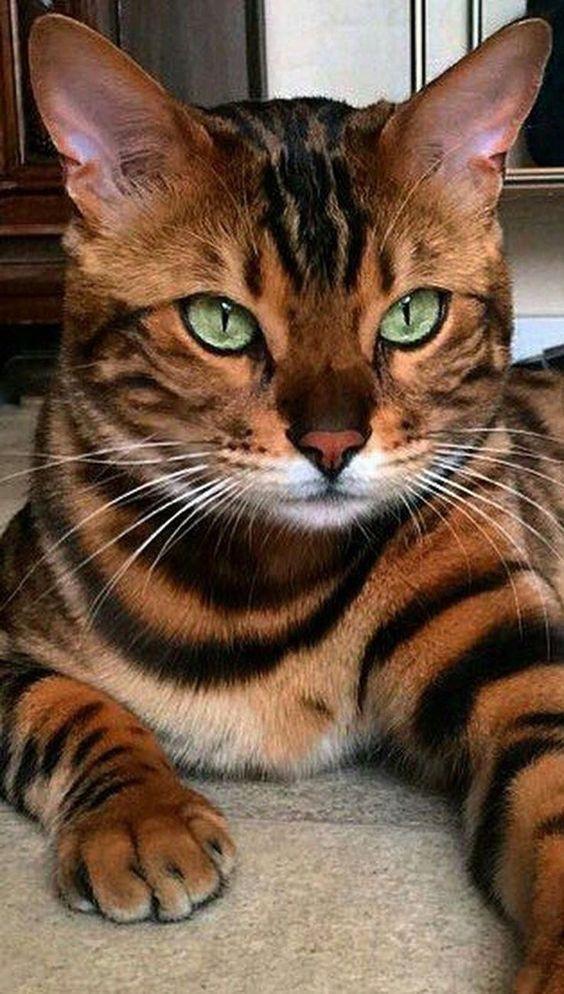 Красивые фотографии глаз кошек в отличном качестве (18)