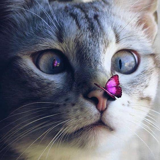 Красивые фотографии глаз кошек в отличном качестве (19)