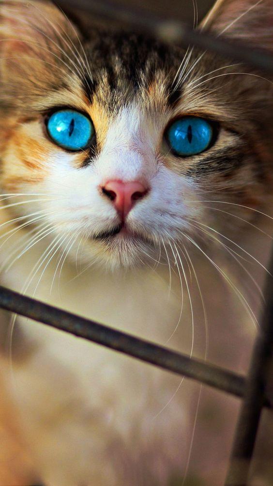 Красивые фотографии глаз кошек в отличном качестве (2)