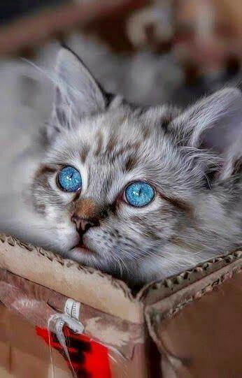 Красивые фотографии глаз кошек в отличном качестве (20)