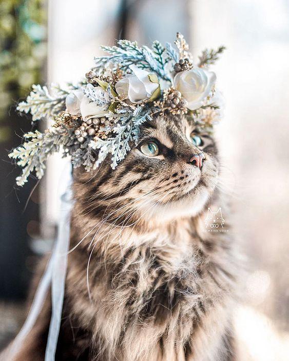 Красивые фотографии глаз кошек в отличном качестве (21)