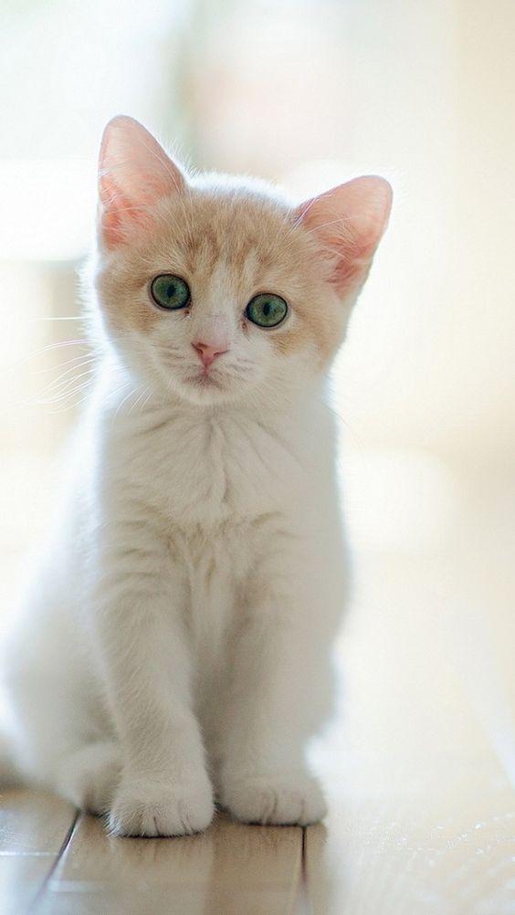 Красивые фотографии глаз кошек в отличном качестве (22)