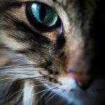 Красивые фотографии глаз кошек в отличном качестве