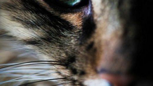 Красивые фотографии глаз кошек в отличном качестве (5)