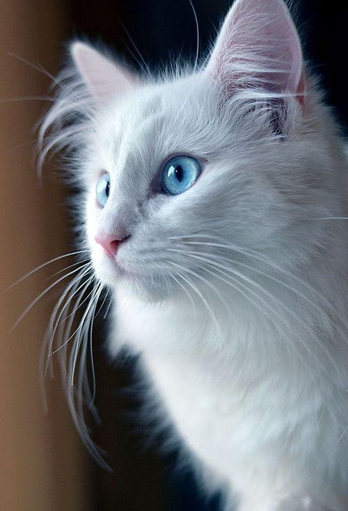 Красивые фотографии глаз кошек в отличном качестве (6)
