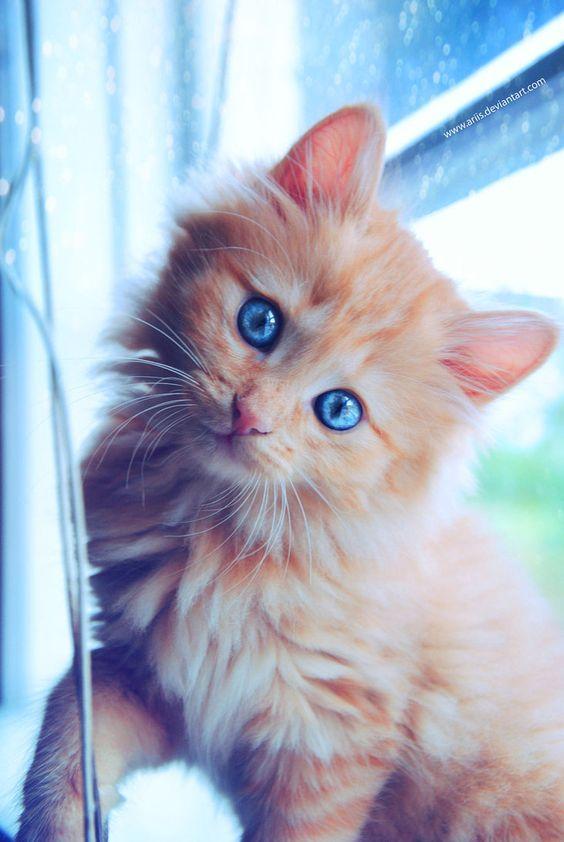 Красивые фотографии глаз кошек в отличном качестве (7)