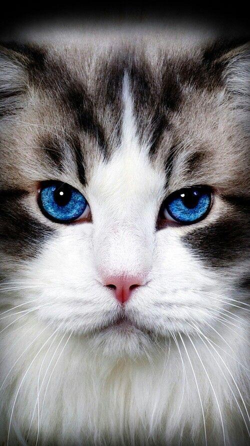 Красивые фотографии глаз кошек в отличном качестве (8)