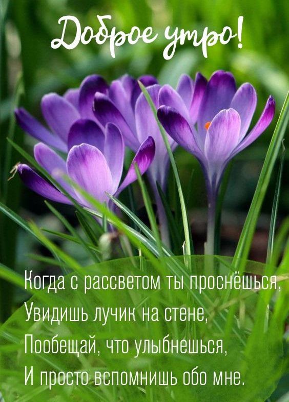 Доброе утро весны, отличные открытки на утренний настрой (8)