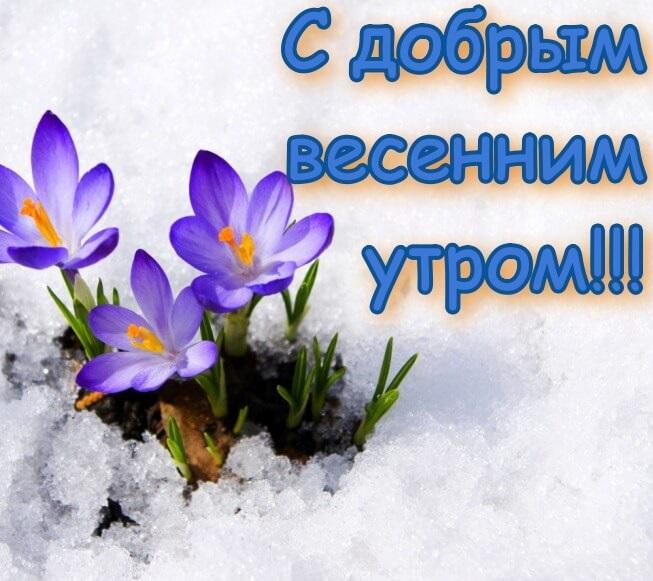 Удивительные картинки с добрым и теплым утром весны (13)