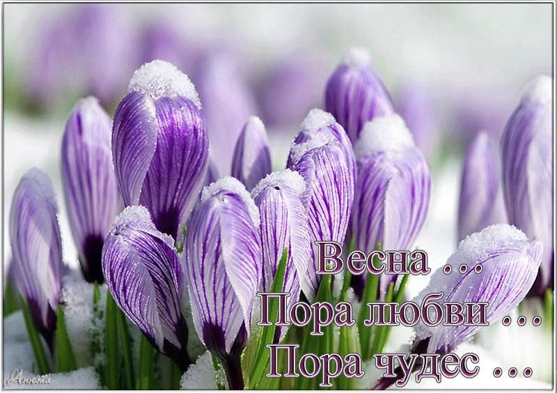 Удивительные картинки с добрым и теплым утром весны (2)