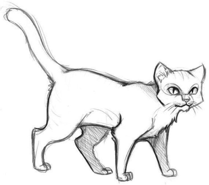 Аниме животные для срисовки - большая подборка (8)